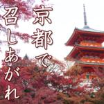 「いなごの甘露煮」京都で出会った日本の伝統的昆虫食