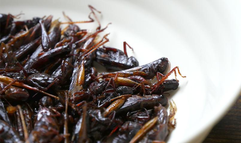 京都の昆虫食「いなごの甘露煮」
