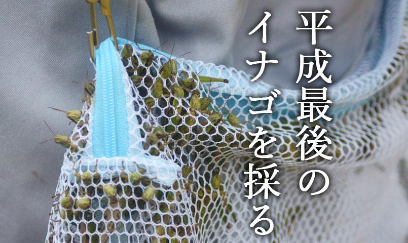 イナゴ採集気仙沼平成最後